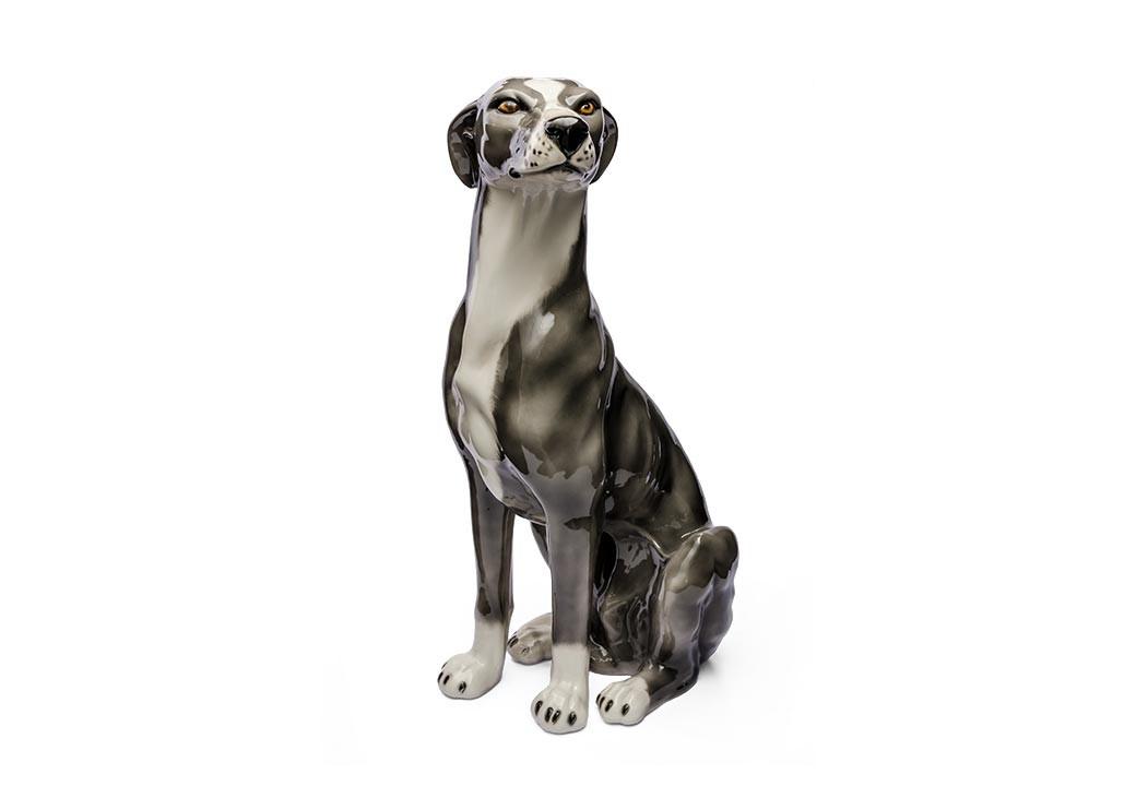 Cachorro Levrier Cinza