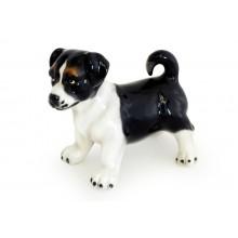 Cachorro jack russel preto & branco